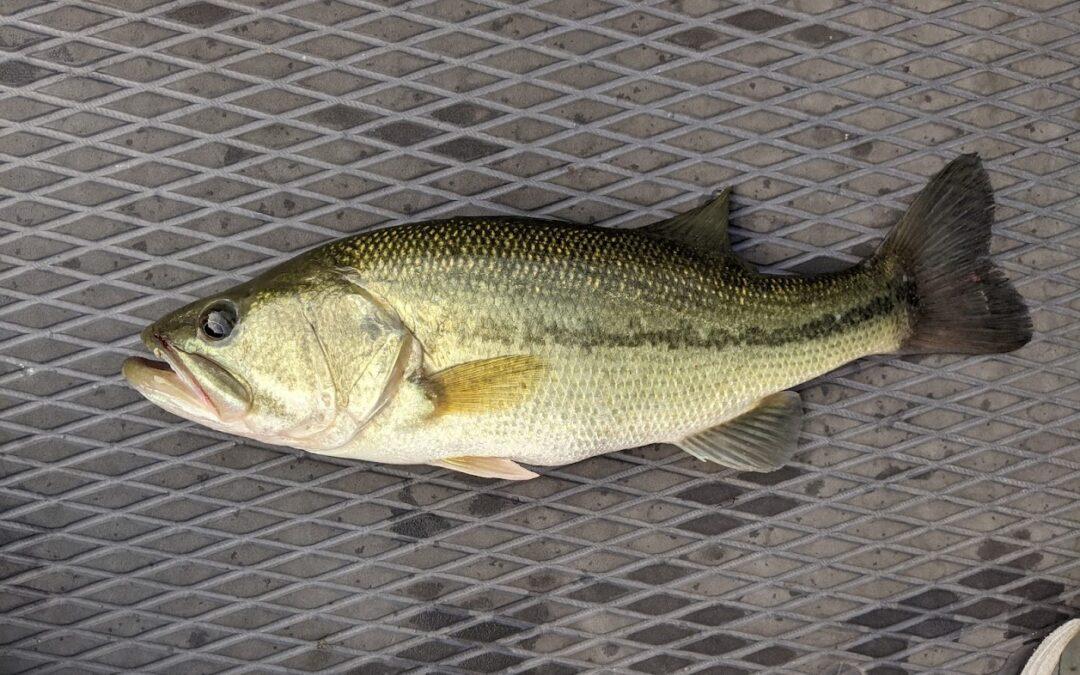 Branson Fishing Guide Table Rock Lake video fishing report 9/7/21
